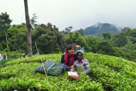 Helping the locals pluck tea leaves :) at Munnar., Kerala